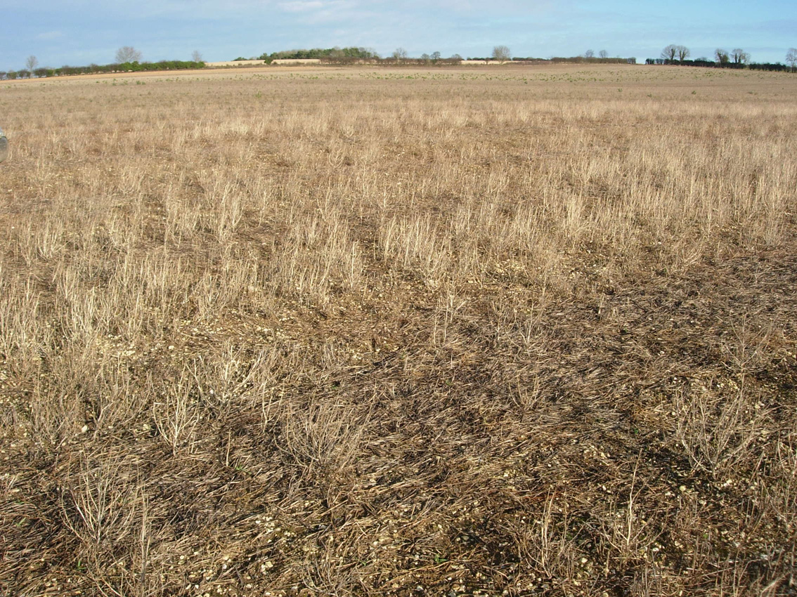 Arable land over winter stubbles
