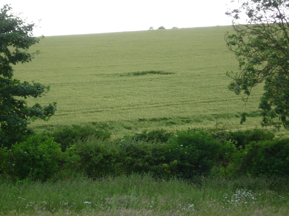 Arable land - skylark plots
