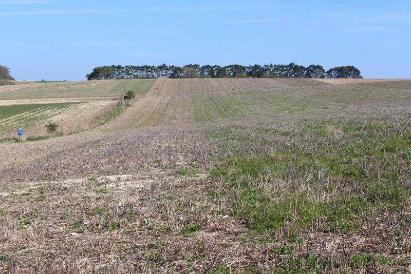 This small area of cereal stubble was still being used by a flock of 12 Curlew through into early May when no other Curlew were on the farm