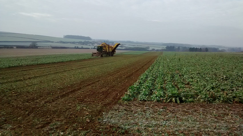 A sugar beet field during harvesting by Russells, Feb 2016