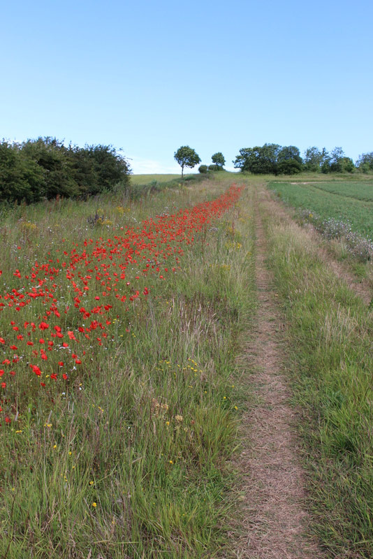 A field margin that mixes rank vegetation, cultivated ground and shorter species-rich grassland