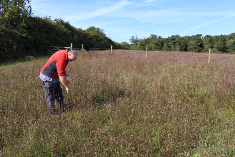 Darren Halls of Work on the Wild Side collecting wildflower seed
