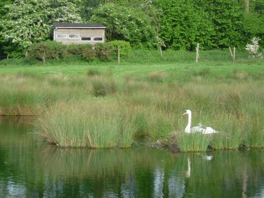 Bird hide with nesting swan